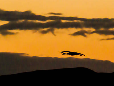 Photograph - Lone Flying Sandhill Crane At Sunset by Jean Noren