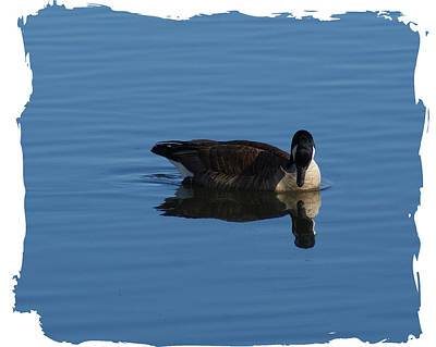 Photograph - Lone Goose Ll by Margie Avellino