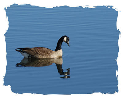 Photograph - Lone Goose Lll by Margie Avellino