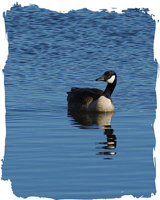 Photograph - Lone Goose by Margie Avellino