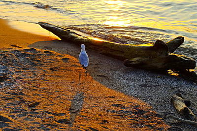 Photograph - Lone Gull by Frozen in Time Fine Art Photography