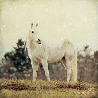 Lone Horse Art Print by Diane Miller