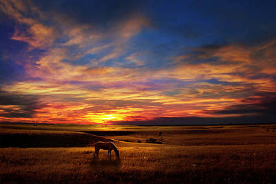 Lone Horse Greenwood County Art Print