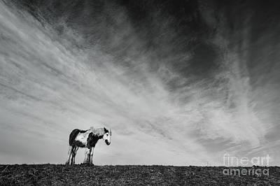 Lone Horse Art Print by Julian Eales