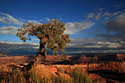 Photograph - Lone Juniper On The Edge At Dead Horse Point by Alan Vance Ley