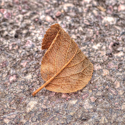 Photograph - Lone Leaf by HW Kateley