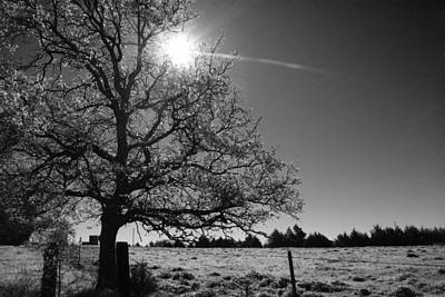 Photograph - Lone Live Oak Bw by Robyn Stacey