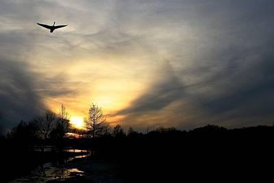 Photograph - Lone Mallard At Sunset by Jeff Mize