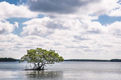Lone Mangrove Art Print by Adam Pender