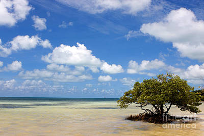 Photograph - Lone Mangrove Tree Florida Keys by Steven Frame