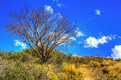 Photograph - Lone Mesquite Along Bronco Creek Trail by Roger Passman