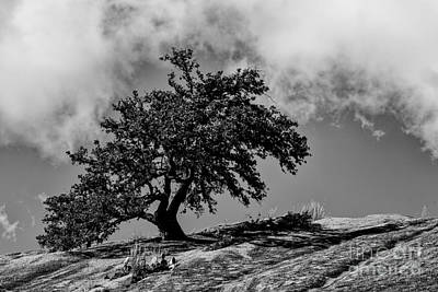 Lone Oak Atop Little Rock - Enchanted Rock State Natural Area Texas Hill Country Print by Silvio Ligutti