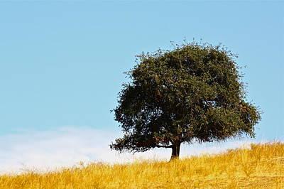 Photograph - Lone Oak by Diana Hatcher