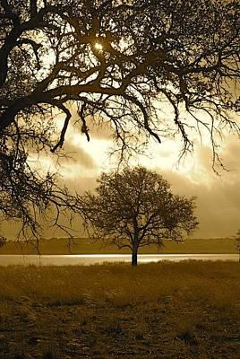 Beastie Boys - Lone Oak by Gary Richards