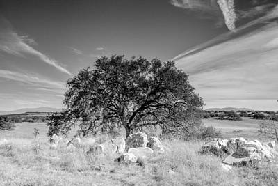 Art Print featuring the photograph Lone Oak by Robert  Aycock
