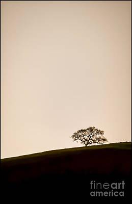 Lone Oak Tree Art Print