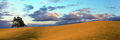 Luis Photograph - Lone Oak Tree On A Hill, Templeton, San by Panoramic Images