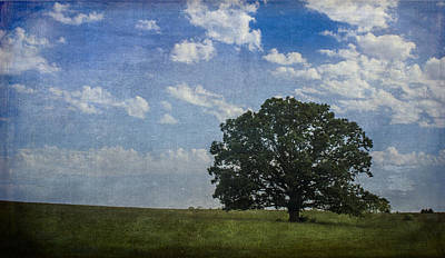 Photograph - Lone Oak by Wayne Meyer