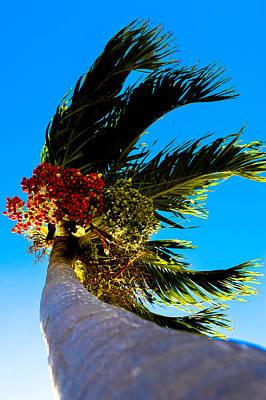 Photograph - Lone Palm by Lisa Cortez