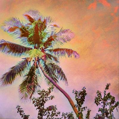 Painting - Lone Palm Tree Against Orange Sky - Square by Lyn Voytershark
