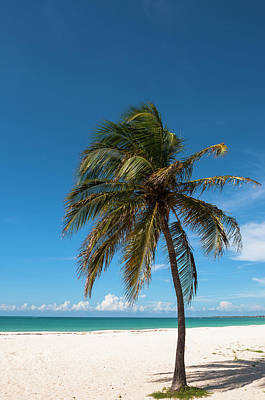 Antilles Photograph - Lone Palm Tree, Palm Beach, Aruba by Alberto Biscaro