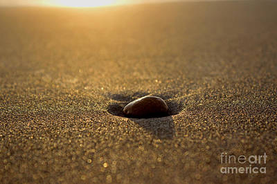 Photograph - Lone Pebble by Deanna Proffitt