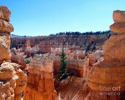 Photograph - Lone Pine Amidst Bryce Canyon Hoodoos by Barbie Corbett-Newmin