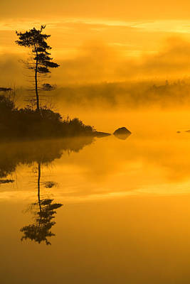 Lone Pine And Misty Lake At Dawn Art Print by Irwin Barrett