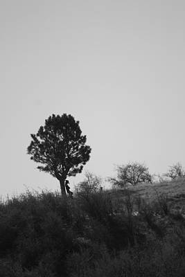 Photograph - Lone Pine Cowboy by Connie Zarn