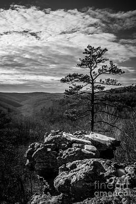 Photograph - Lone Pine Monochrome by Jim McCain