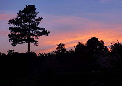 Photograph - Lone Pine Sunset by Jean Wright
