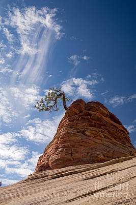 Photograph - Lone Pine Tree by Fred Stearns