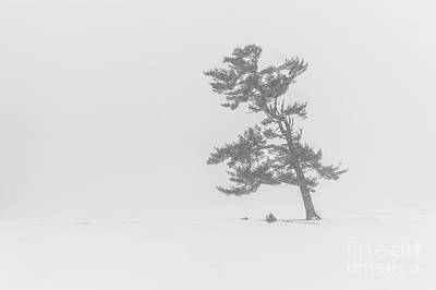 Lone Pine Tree In A Blizzard Art Print