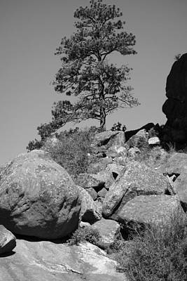Photograph - Lone Pine Tree In Black And White by Ann Powell