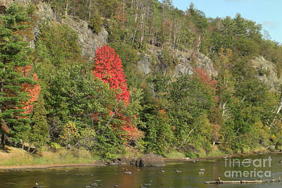 Stone Photograph - Lone Red Tree by Deborah Smolinske