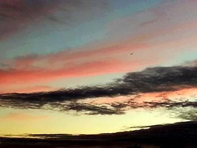 Painting - Lone Seagull by Nikki Dalton