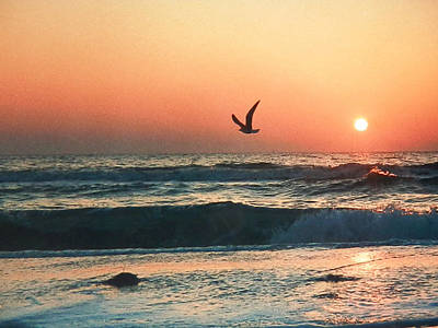 Photograph - Lone Seagull Sunset Flight by Belinda Lee