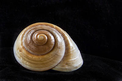 Photograph - Lone Shell by Jean Noren