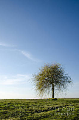 Photograph - Lone Spring Tree by Kennerth and Birgitta Kullman