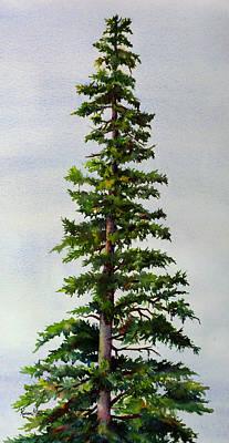 Lone Spruce Art Print by Karen Mattson