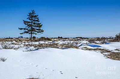 Photograph - Lone Spruce Tree by Kennerth and Birgitta Kullman