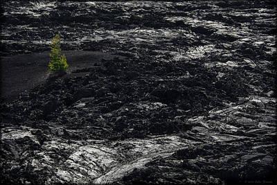 Photograph - Lone Survivor by Erika Fawcett