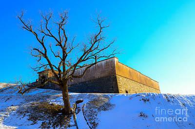 Photograph - Lone Survivor by Jeff at JSJ Photography
