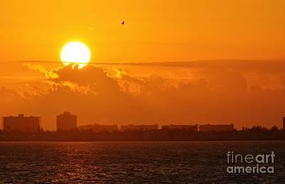 Photograph - Lone Tern At Sunrise by Lynda Dawson-Youngclaus