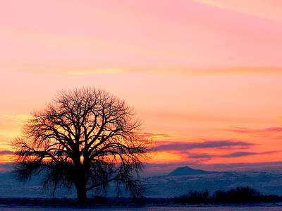 Photograph - Lone Tree 1 by Rebecca Adams