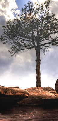 Jerry Sodorff Royalty-Free and Rights-Managed Images - Lone Tree 11351 by Jerry Sodorff