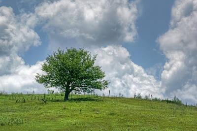 Photograph - Lone Tree #2 by Nikolyn McDonald