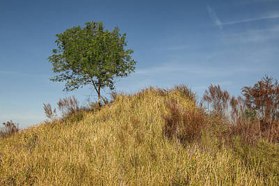 Photograph - Lone Tree by Al Hurley