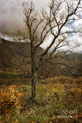 Photograph - Lone Tree Along Skyline Drive by Dawn Gari