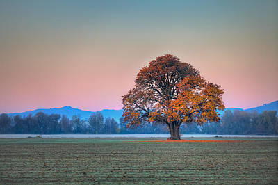 Photograph - Lone Tree And Alpenglow by Joseph Bowman